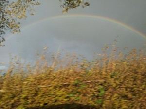 Rainbow and Hedge