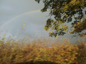 Rainbow Behind Tree
