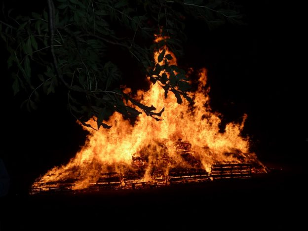 Fire and Trees